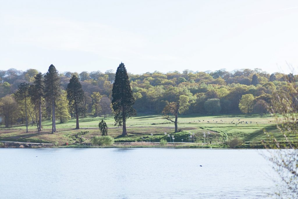 The lake at Trentham Gardens in Staffordshire.